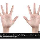 指の長さは性的指向と関係があるそうです。の記事より