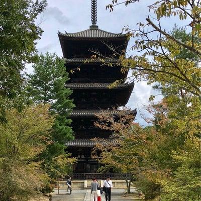 京都旅行② ~仁和寺、龍安寺、二条城、伊右衛門サロン~の記事に添付されている画像