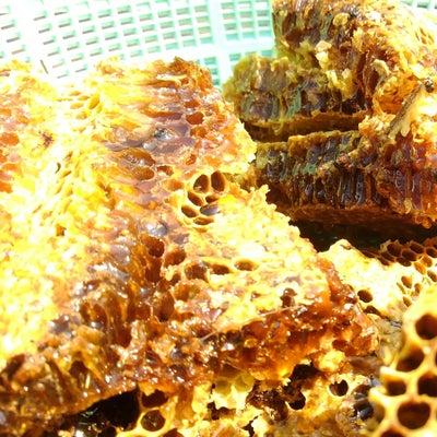 ハチミツとりの記事に添付されている画像
