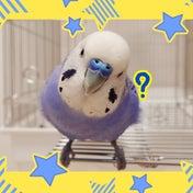 キャンドゥの鳥さんグッズもすごい!