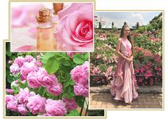 液体の宝石ブルガリアンローズや収穫祭「バラ祭り」について