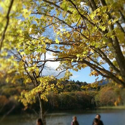 信州の紅葉*小鳥ヶ池の記事に添付されている画像
