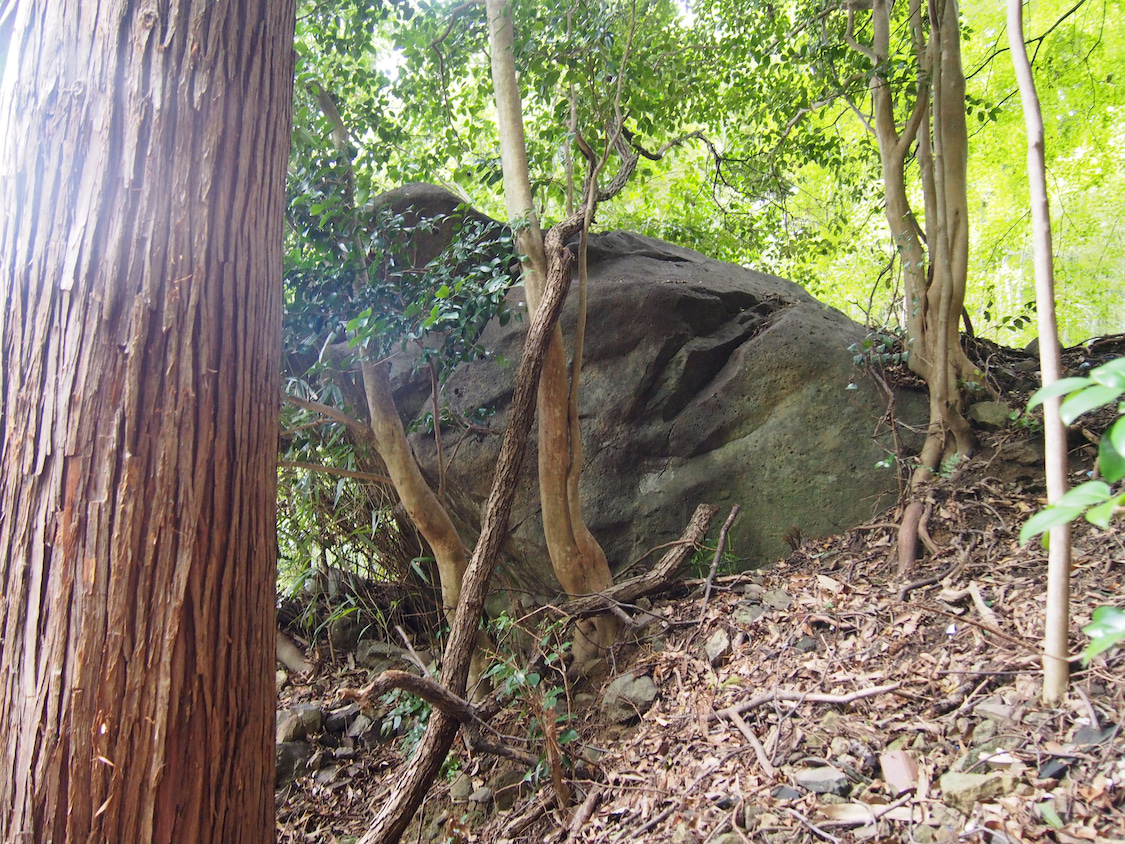 マコモづくしの出雲⁂古代イワクラ文明への超フライトツアーの記事より