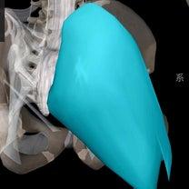 筋肉紹介パート2  腰痛、骨盤、美尻に関連する筋肉『大臀筋』の記事に添付されている画像