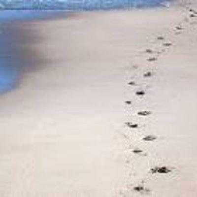 砂浜の足跡の記事に添付されている画像