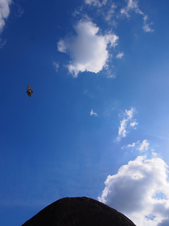 アゲハ蝶は神の使い⁂古代イワクラ文明への超フライトツアーの記事より