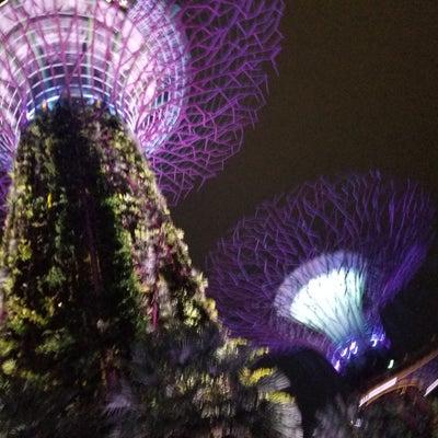 シンガポールのアンダーヘア事情の記事に添付されている画像
