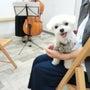 【予約受付中】愛犬と…