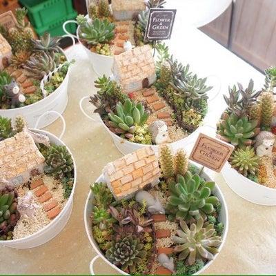 可愛い箱庭が完成♡多肉植物でミニチュアの世界観♡の記事に添付されている画像