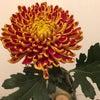 お花の効用の画像