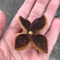 椿の殻の記事に添付されている画像