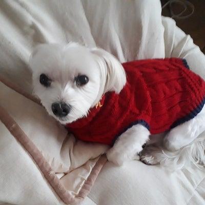 シンペイがセーターの記事に添付されている画像