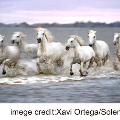 海の白い馬と Diane Birch - Rewindの記事に添付されている画像