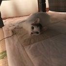 猫も悪性リンパ腫!猫に治療が効くワケ!治らない常識は通用しない byなるりえの記事より
