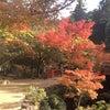 宮島の紅葉オススメスポットをご紹介!の巻の画像