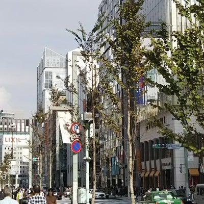 銀座の街路樹の記事に添付されている画像