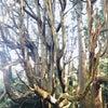 キングソロモンヒーリングモダリティ③☆生命の樹ヒーリング♪の画像