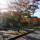 今年も新漬沢庵の季節が近づきました☆の記事より