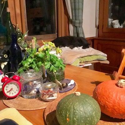 くろちゃんのハロウィン前夜の記事に添付されている画像