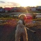 29日の夕方散歩です~♪の記事より