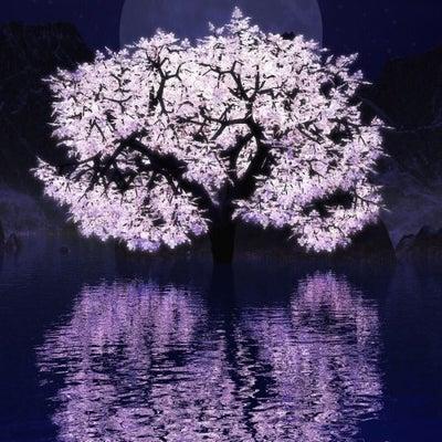 ブログ紹介:シンガーソングライターのMiiyaさんの記事に添付されている画像