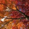 11月の各種カラー講座のお知らせ♪の画像