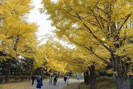 中島公園3