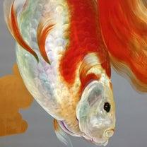 金魚絵師 深堀隆介展へ。の記事に添付されている画像