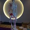 ヨガ解剖学 内田かつのり先生の画像