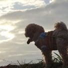 11月2日の夕方散歩とおまけの記事より