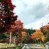 塩原の紅葉ドライブの画像
