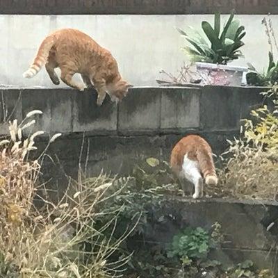 仔猫を川に流して殺す福島!野良ママ猫の悲哀の記事に添付されている画像