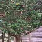 秋の 早池峰神社【遠野】の記事より