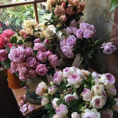 『初冬に咲かせようぜ!IN グリガデ』 に行ってきた♪の記事に添付されている画像
