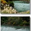 徳山湖の紅葉と徳山ダム見学・・D