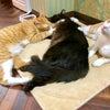 保護猫カフェ!ネコリパブリック!の画像