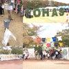 ロハスフェスタを楽しむポイントの画像