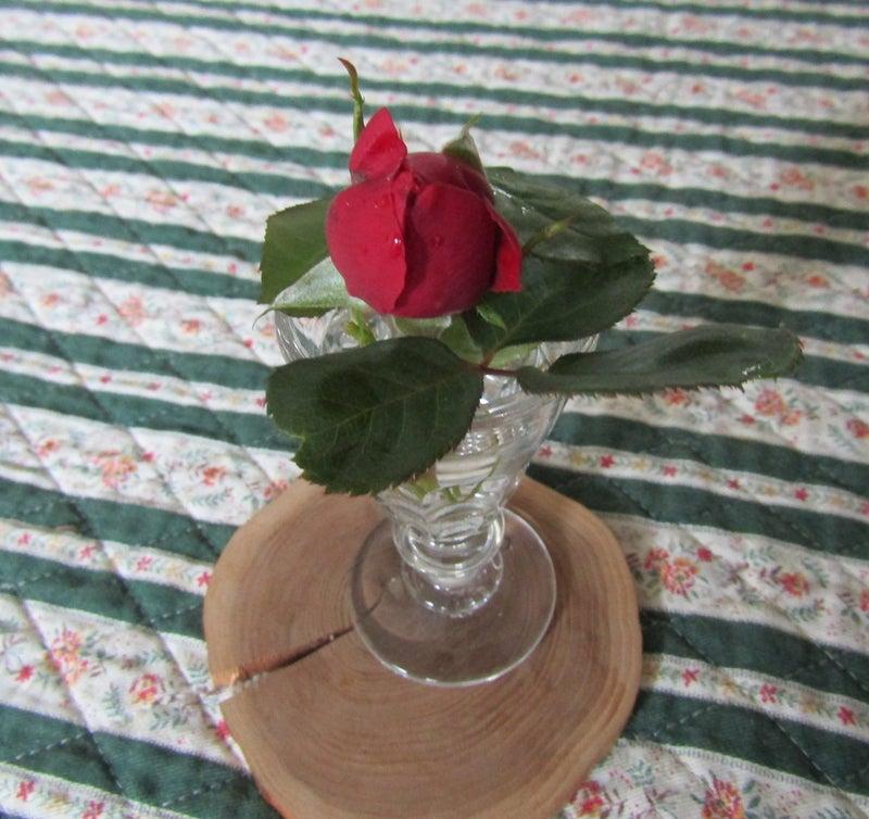 12日②寒くて外では咲かない薔薇