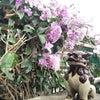 沖縄の秋の画像