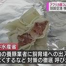 アフリカ豚コレラ、致死率100%、中国生餃子から発見。2018/11/10の記事より