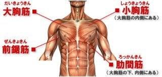 筋肉 痛 脇の下