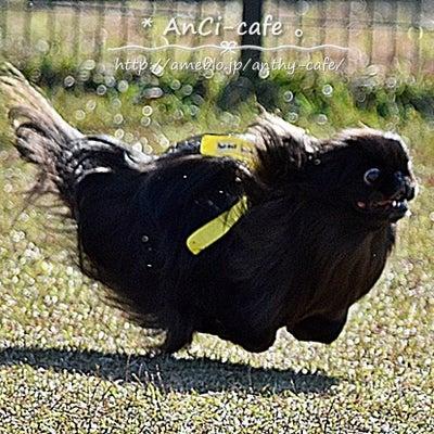 アンシェルのなんちゃって飛行犬の記事に添付されている画像