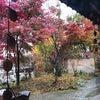 紅葉 ~ver.2~の画像