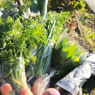 ピンピン お野菜 ありがとうの記事に添付されている画像