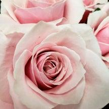 ピンクの薔薇♪