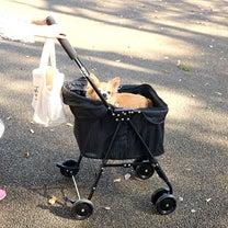 ダイソー可愛すぎる200円トートをお散歩バッグに♪の記事に添付されている画像