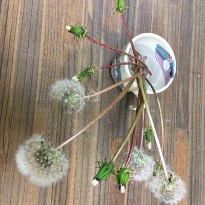 秋の綿毛の記事に添付されている画像