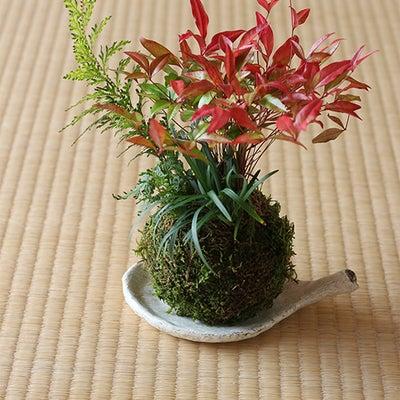 『お正月の苔玉づくりのワークショップ』を開催します☆の記事に添付されている画像