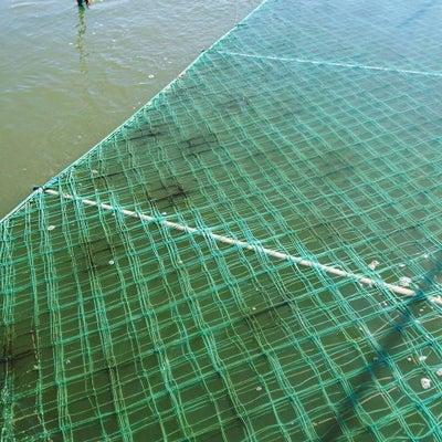 3枚展開と海の栄養不足の記事に添付されている画像