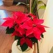 クリスマス飾りした!…